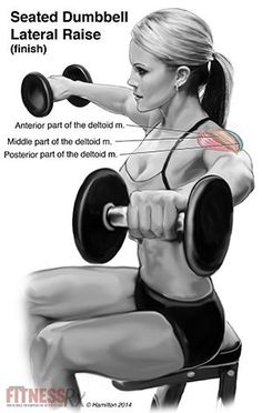 Seated Dumbbell Late