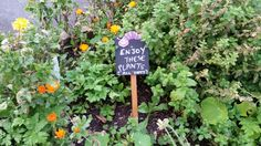 Edible plants for free