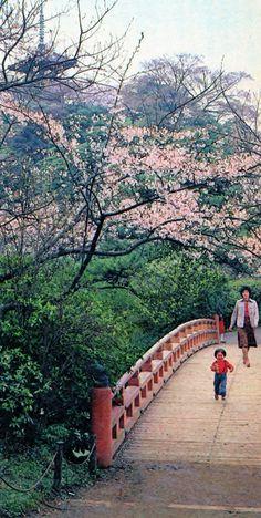 1980年頃、三溪園(中区本牧三之谷)