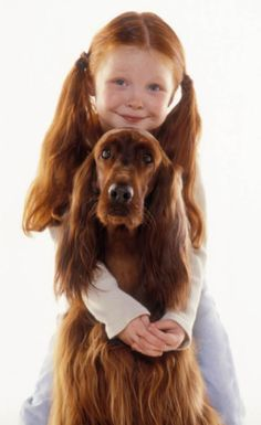 The Irish Setter | Best Dogs for Kids: 20 Dog Breeds Good With Children