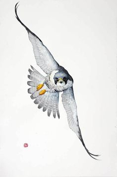 bird artwork Sketches Inspiration is part of Beautiful Bird Drawings And Art Works For Your Inspiration - Peregrine Falcon (Unframed) Watercolor Bird, Watercolor Animals, Bird Drawings, Animal Drawings, Lechuza Tattoo, Falcon Tattoo, Peregrine Falcon, Bild Tattoos, Bird Artwork
