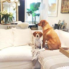 Inside Meghan Markle's Toronto home - Vogue Living