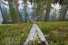 kal16 >Helmensininen Rytijärvi