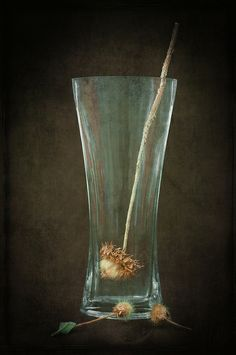 Still Life With Glass Vase