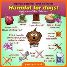 Harmful for dogs.