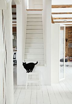 white wooden floors and loving the black cat!