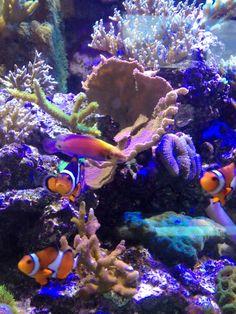 57 best fish n stuff images fish tanks planted aquarium aquarium