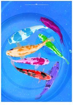 Koi fish colors swim