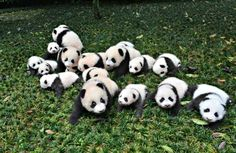 The+Best+Job+in+The+World+Involves+Hugging+Baby+Pandas  - CountryLiving.com