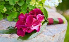 Fotos de Bouquets Bridezilla, Wedding Bouquets, Wedding Photos, Boutonnieres, Pictures Of Flowers, Floral Decorations, Calla Lilies, Tulips, Hot Pink