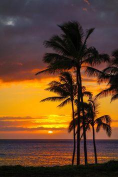 Sunset - Kapolei, Hawaii (by shamsazizi) Hawaii Honeymoon, Hawaii Vacation, Hawaii Travel, All About Hawaii, Sunsets Hawaii, Palm Tree Sunset, Palm Trees, Hawaii Pictures, Nature