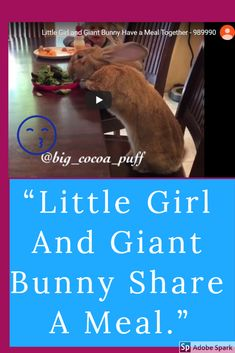 #giantbunnystuffedanimal #giantbunnyart #giantbunnyflemish #giantbunnyplush #bigrabbitgiantbunny #giantbunnygoogleearth #giantbunnyfantasy #giantbunnytoy #giantbunnydrawing #giantbunnydiy Bunny Plush, Bunny Toys, Giant Bunny, Cocoa Puffs, Compilation Videos, Bunny Art, Little Girls, Meals, Rabbit Toys