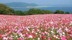 能古島、福岡県 Nokonoshima, Fukuoka