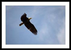 Dougherty Iowa Eagles 5 Framed Print By Bonfire #Photography