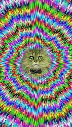 LSD Cat