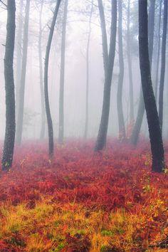 Autumn colors (by Guillermo Carballa), via Tumblr