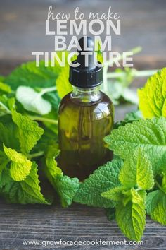Lemon balm is a plant that grows rather freely and for some is considered a nuisance. What some don't realize is that lemon balm has many benefits fro Lemon Balm Recipes, Lemon Balm Uses, Healing Herbs, Medicinal Herbs, Natural Healing, Holistic Healing, Herbal Tinctures, Herbalism, 100 Proof Vodka