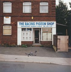 Martin Parr on Peter Mitchell Martin Parr, Color Photography, Street Photography, Racing Pigeon Lofts, British Values, Racing Pigeons, City Aesthetic, A Moment In Time, Urban Life