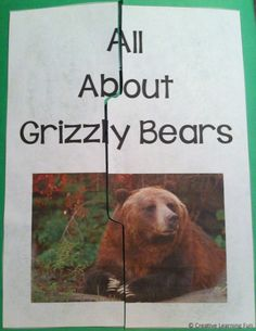 A Free Grizzly Bear Lapbook by Creative Learning Fun