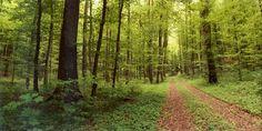 Horizon Perfect met Kodak Ektar 100 film. Een anoniem bos ergens in Duitsland.
