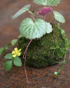 Kokedama 盆栽・苔玉 : Botanic Journal - 植物誌 -  http://botanicjou.exblog.jp/tags/%E7%9B%86%E6%A0%BD%E3%83%BB%E8%8B%94%E7%8E%89/#