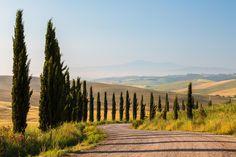 Road to Monteroni d'Arbia by Zoltán Kőmíves on 500px