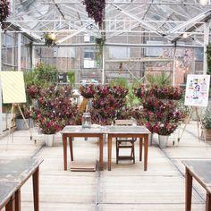 Blumen über Blumen - beim Flowerworkshop von bloomon