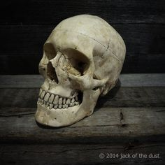 WANT OH WANT IT! || Bone Head by Jack of the Dust in Australia