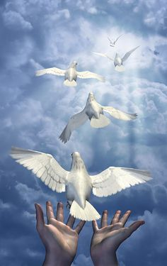 Illustration about Realeasing the doves - a combination of renders, digital photos and digital painting. Illustration of birds, christian, peace - 2086650 Dove Pictures, Jesus Pictures, Peace And Harmony, Peace And Love, Epa Baba, Miséricorde Divine, Dove Flying, Jesus E Maria, Saint Esprit