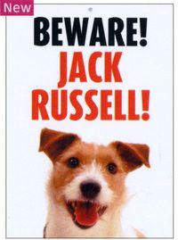 Beware!!Jack Russell