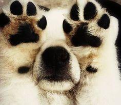 "I ""PAW"" love you.. #Animal love #pets"
