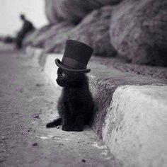 """steampunktendencies: """"Caption this! #steampunktendencies #steampunk #art #cat #kitty """""""