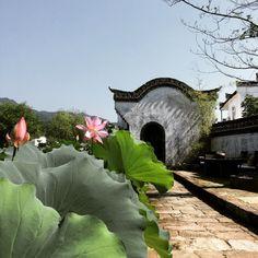 夏·荷花· 中国  Xià·héhuā·Zhōngguó Summer · Lotus· China