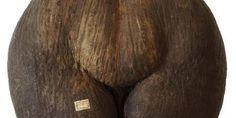 NaturMedicinsk Museum har lavet en intelligent udstilling om naturens afrodisiaka