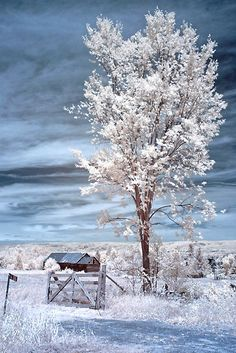 Country Tree, by Debbie Pinard