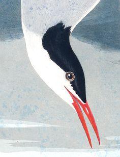 John James Audubon's Birds of America | Audubon - public domain and gorgeous