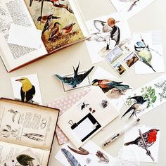 Beautiful birdies on a quiet Wednesday morning  Can you tell I went book shopping yesterday?