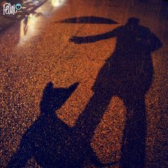 Priorities 😸 . . . . . #Caturday #Felini #cat #cute #catsHaveServants #rain #underMyUmbrella #servant #catUnderUmbrella #cuteCat #funnyCatPictures #funnyCats #kitty #Katze #かわいいねこ #gatos #猫 #rainyNight #kedi