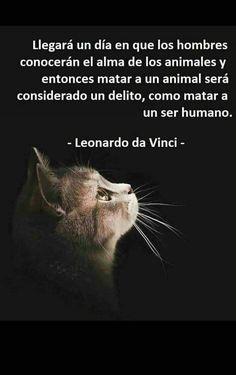 170 Ideas De Afirmaciones Bellas En 2021 Perros Frases Animales Frases Amantes De Perros