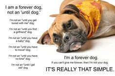 "I am a forever dog, not an ""until dog""."