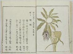 (Ehon haikai) Yama no sachi (絵本俳諧) 山幸 (Boon of the Mountains (an Illustrated Haikai Book))