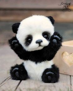 Picture result for pandas bebes - Small animals - result # f . - Picture result for pandas bebes – Small animals – result # for … # bebes smal - Baby Animals Super Cute, Cute Little Animals, Cute Funny Animals, Cute Cats, Cutest Animals, Small Animals, Cute Animal Names, Cute Animal Photos, Cute Animal Drawings