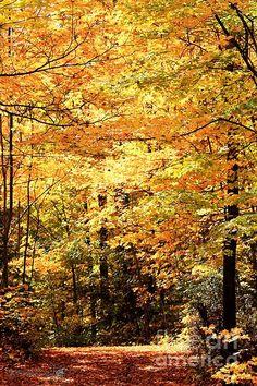 Fall Foliage by J McCombie.