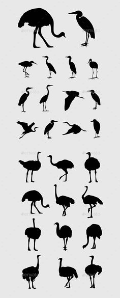 Heron and Ostrich Silhouettes