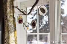 Our Little Coop: Pressed Flower Ornaments