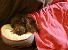 Human foods the dogs:the good, the bad and the ugly!