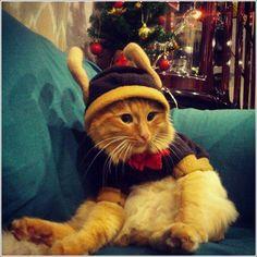 30 images de chats et de chiens déguisés en mode Noël !
