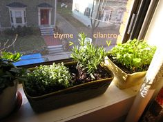 Growing Herbs Indoors, Friday Meme, Memes, Planter Pots, Gardening, Fashion, Moda, Fashion Styles, Friday Memes