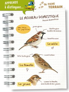 Discover recipes, home ideas, style inspiration and other ideas to try. Animals For Kids, Animals And Pets, French Expressions, Permaculture Design, Bird Theme, Backyard Birds, Science And Nature, Love Birds, Animal Kingdom