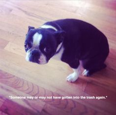 guilty Boston. I've seen this exact look on Olive, though she doesn't feel guilty very often.